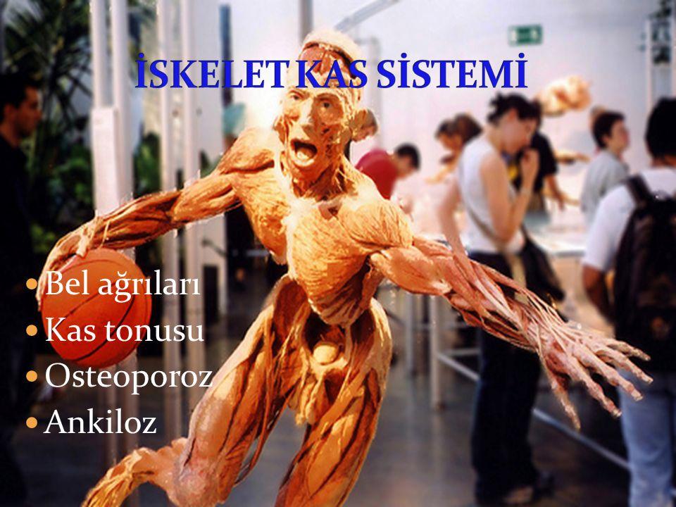 İSKELET KAS SİSTEMİ Bel ağrıları Kas tonusu Osteoporoz Ankiloz