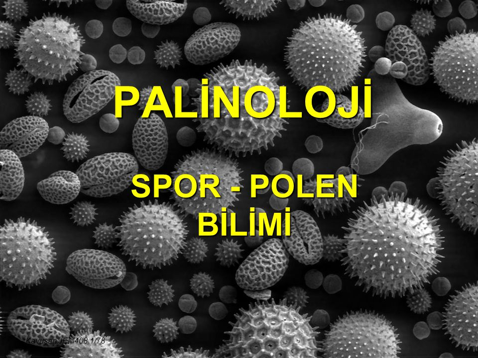 PALİNOLOJİ SPOR - POLEN BİLİMİ Kavuşan JEM408 1/78