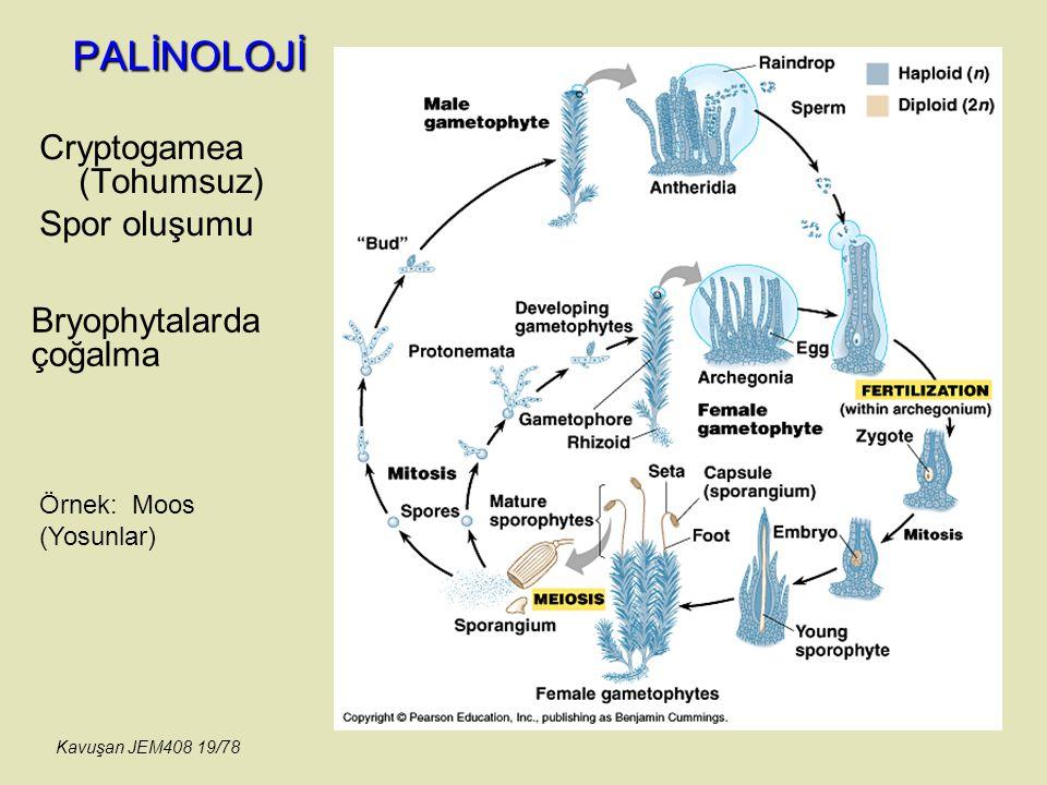 PALİNOLOJİ Cryptogamea (Tohumsuz) Spor oluşumu Bryophytalarda çoğalma