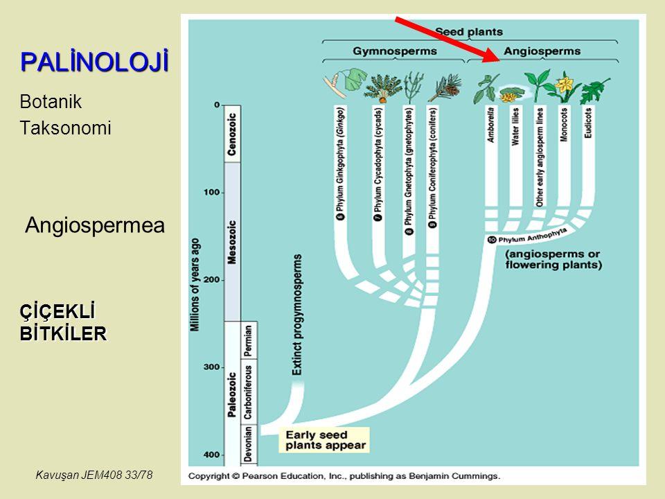 PALİNOLOJİ Angiospermea Botanik Taksonomi ÇİÇEKLİ BİTKİLER