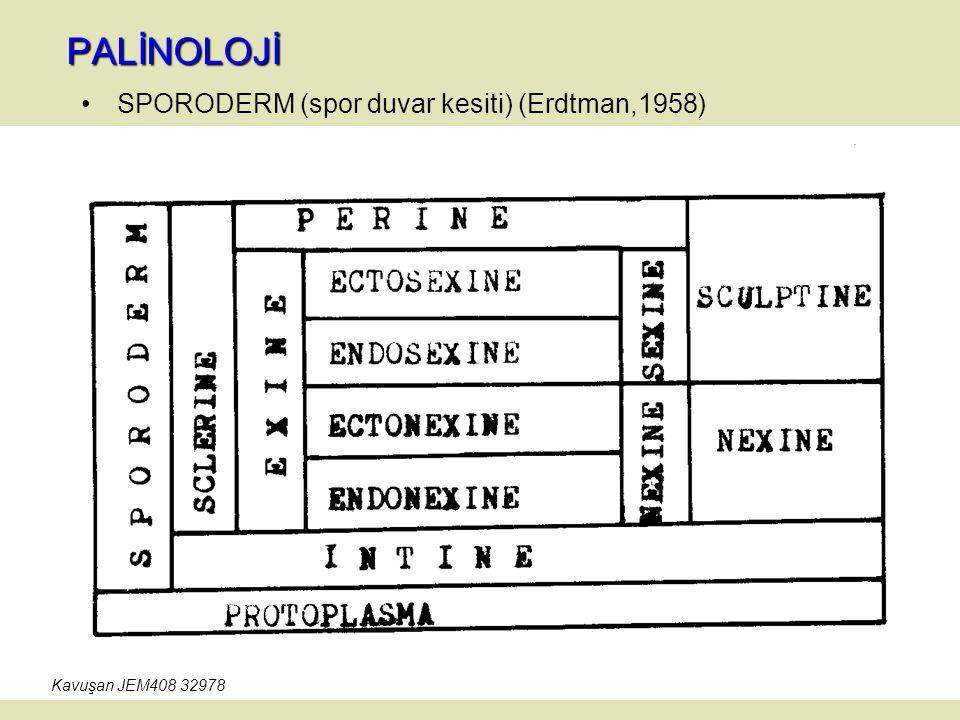 PALİNOLOJİ SPORODERM (spor duvar kesiti) (Erdtman,1958)