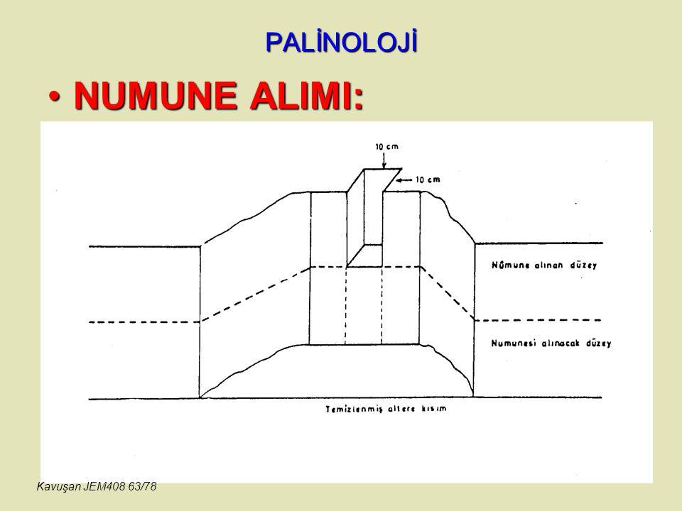 PALİNOLOJİ NUMUNE ALIMI: Kavuşan JEM408 63/78