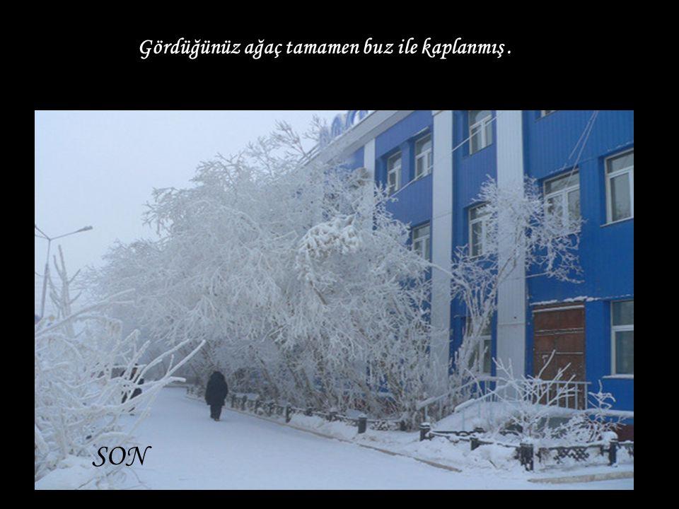 Gördüğünüz ağaç tamamen buz ile kaplanmış .