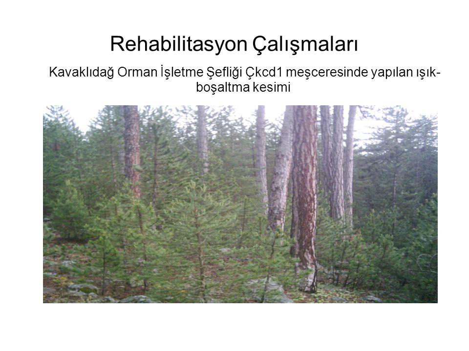 Rehabilitasyon Çalışmaları