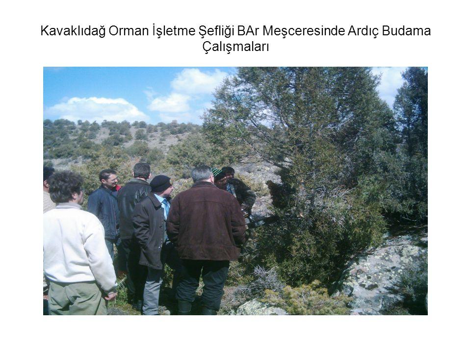 Kavaklıdağ Orman İşletme Şefliği BAr Meşceresinde Ardıç Budama Çalışmaları