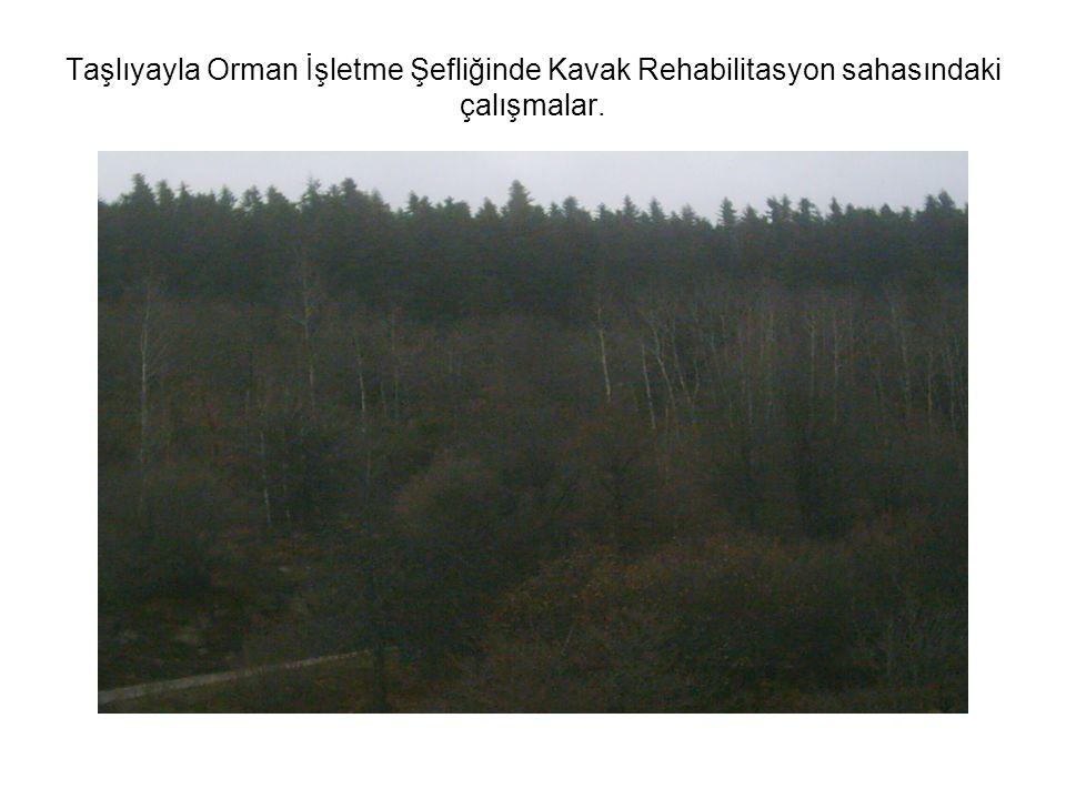 Taşlıyayla Orman İşletme Şefliğinde Kavak Rehabilitasyon sahasındaki çalışmalar.