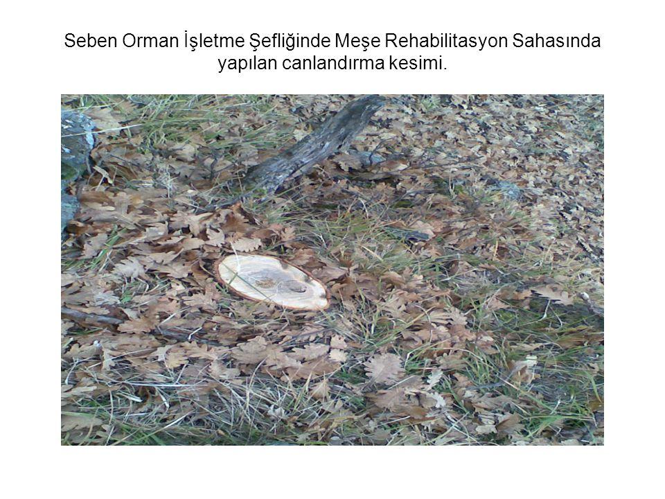Seben Orman İşletme Şefliğinde Meşe Rehabilitasyon Sahasında yapılan canlandırma kesimi.