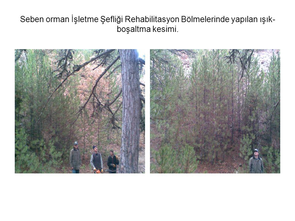 Seben orman İşletme Şefliği Rehabilitasyon Bölmelerinde yapılan ışık-boşaltma kesimi.