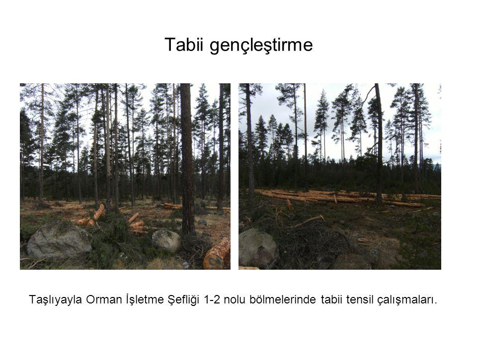 Tabii gençleştirme Taşlıyayla Orman İşletme Şefliği 1-2 nolu bölmelerinde tabii tensil çalışmaları.