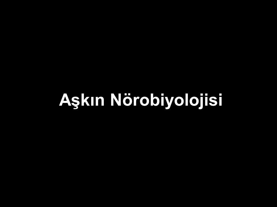 Aşkın Nörobiyolojisi