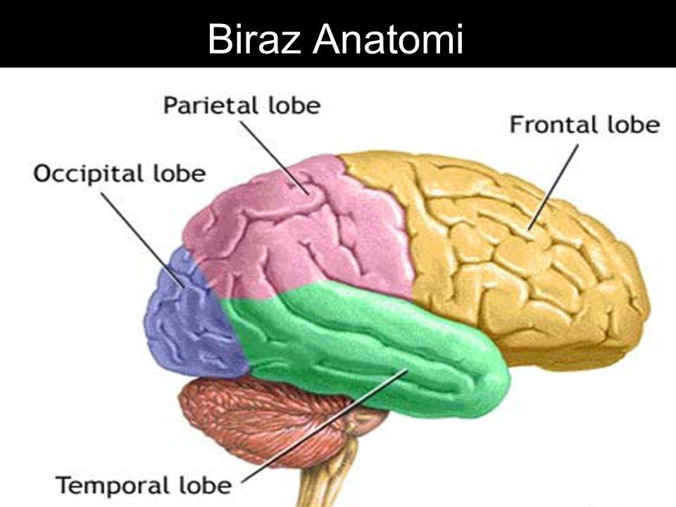 Biraz Anatomi