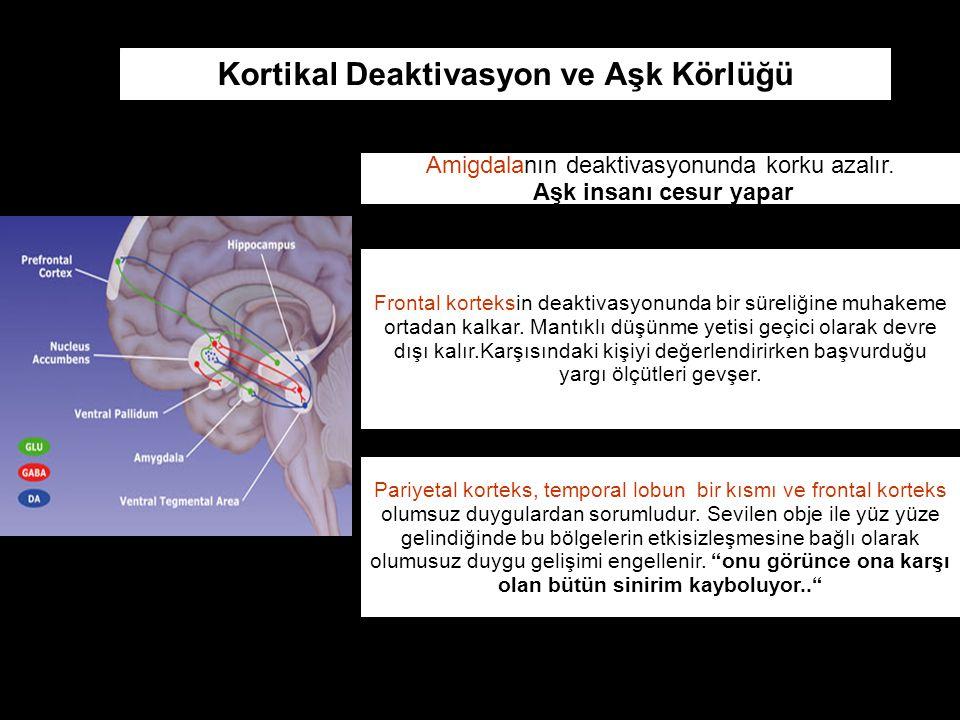 Amigdalanın deaktivasyonunda korku azalır.