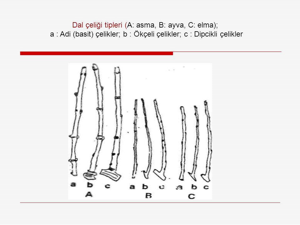 Dal çeliği tipleri (A: asma, B: ayva, C: elma);