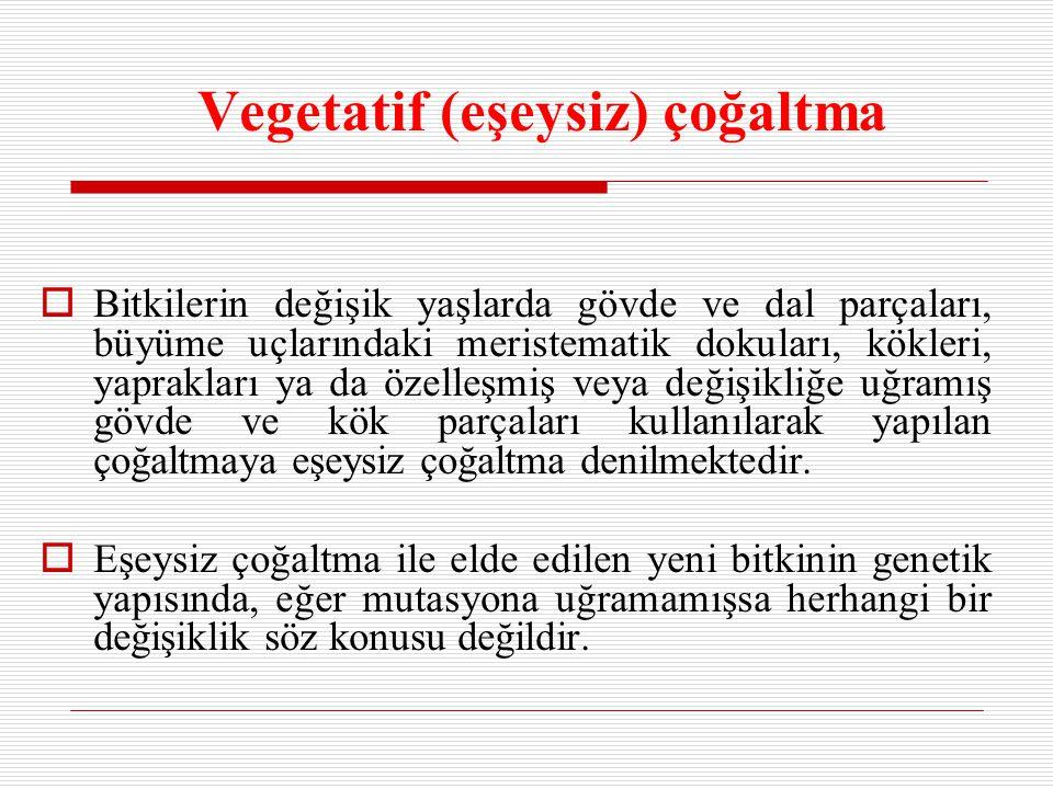 Vegetatif (eşeysiz) çoğaltma