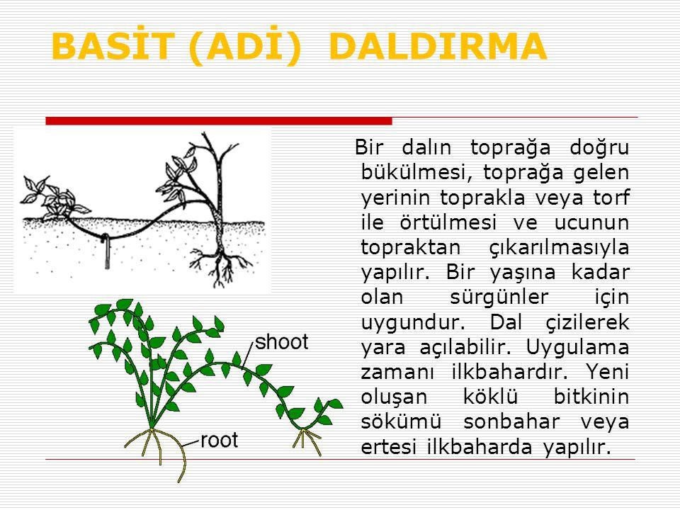 BASİT (ADİ) DALDIRMA