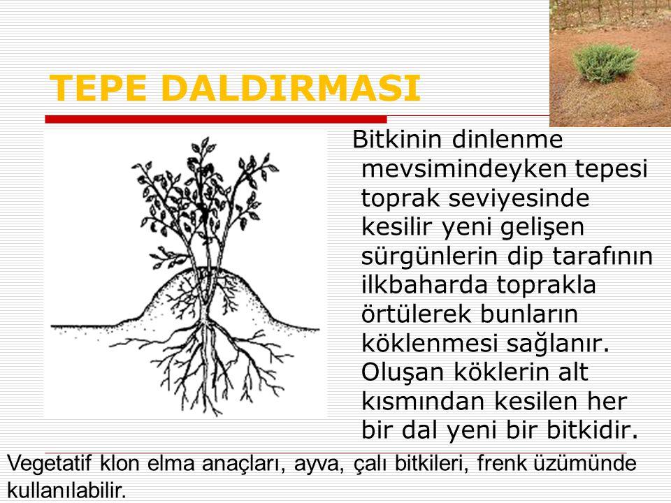 TEPE DALDIRMASI