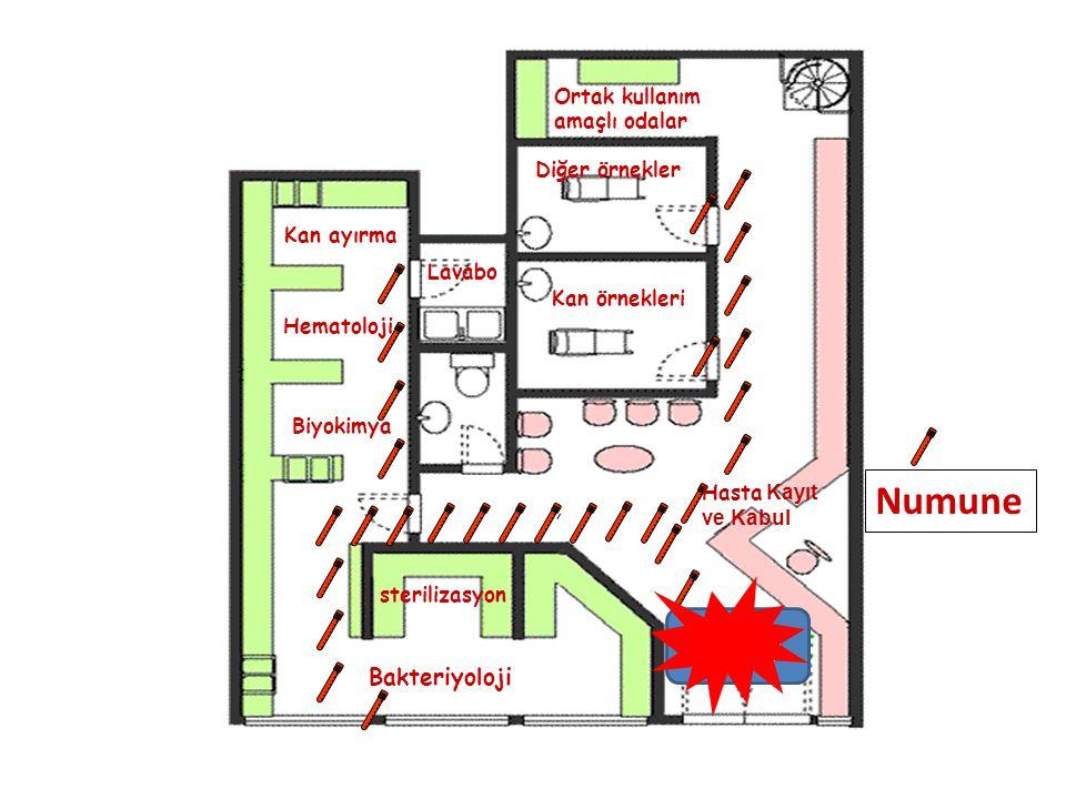 Numune GİRİŞ Bakteriyoloji Ortak kullanım amaçlı odalar Diğer örnekler