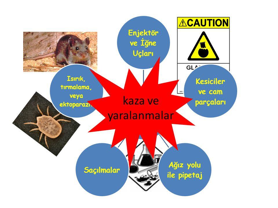 kaza ve yaralanmalar Isırık, tırmalama, veya ektoparazit