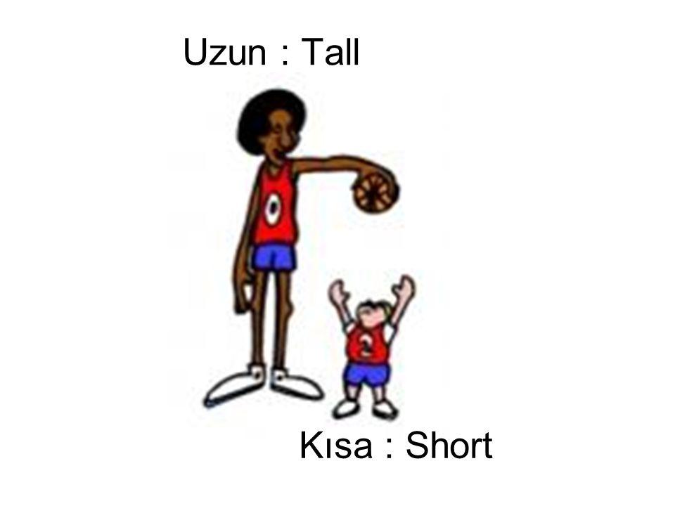 Uzun : Tall Kısa : Short