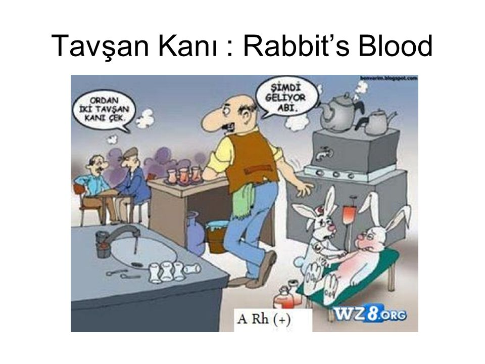 Tavşan Kanı : Rabbit's Blood
