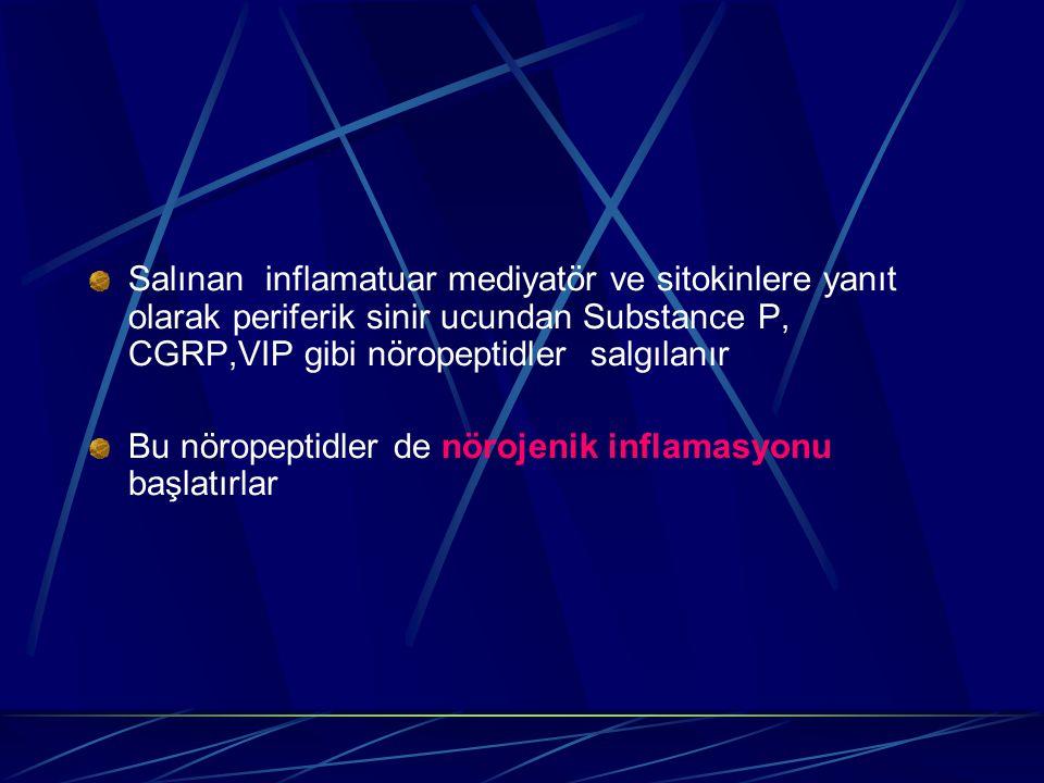 Salınan inflamatuar mediyatör ve sitokinlere yanıt olarak periferik sinir ucundan Substance P, CGRP,VIP gibi nöropeptidler salgılanır