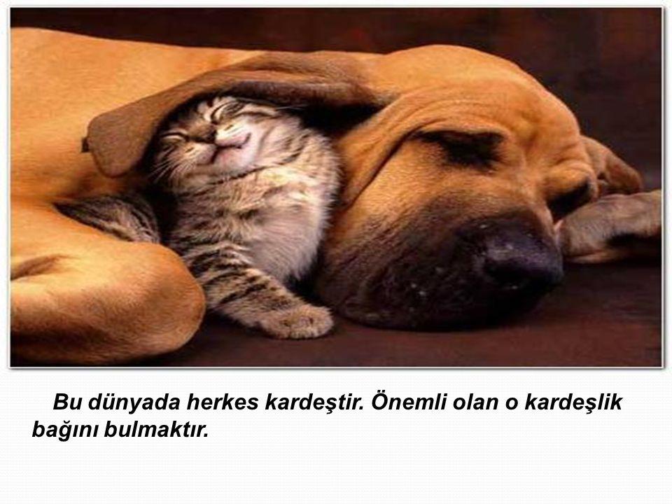 Bu dünyada herkes kardeştir. Önemli olan o kardeşlik