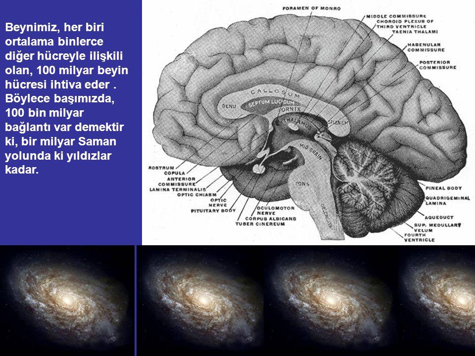 Beynimiz, her biri ortalama binlerce diğer hücreyle ilişkili olan, 100 milyar beyin hücresi ihtiva eder .