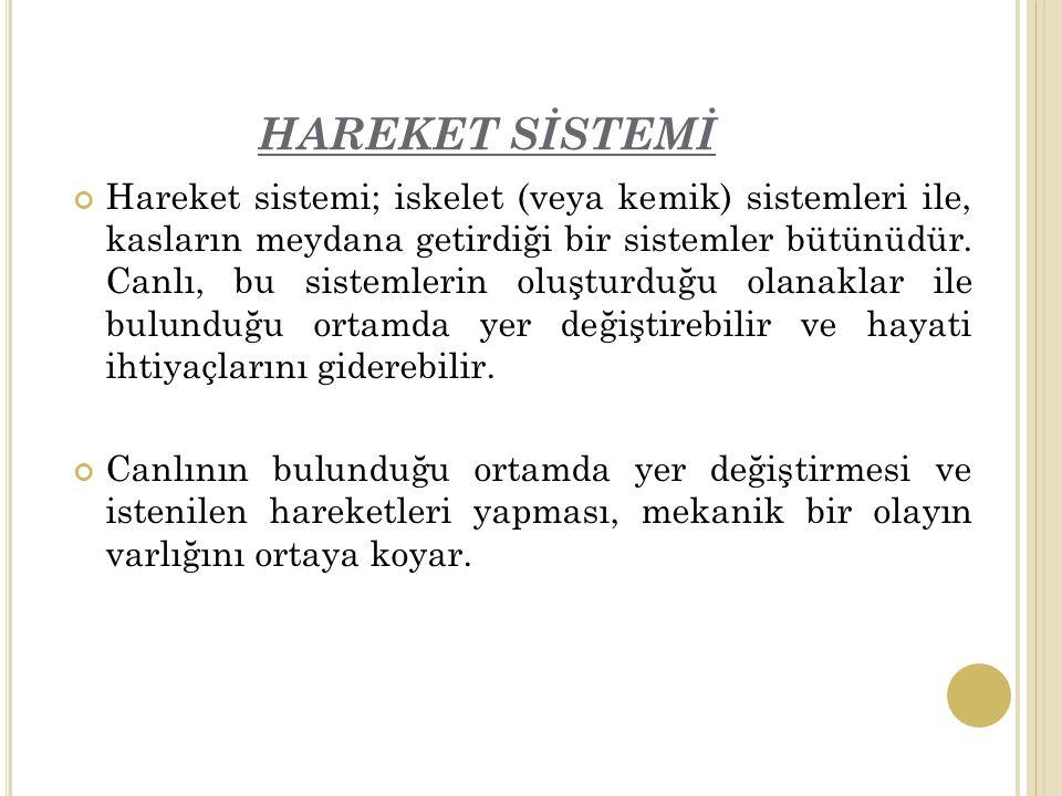 HAREKET SİSTEMİ