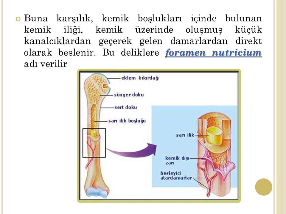 Buna karşılık, kemik boşlukları içinde bulunan kemik iliği, kemik üzerinde oluşmuş küçük kanalcıklardan geçerek gelen damarlardan direkt olarak beslenir.