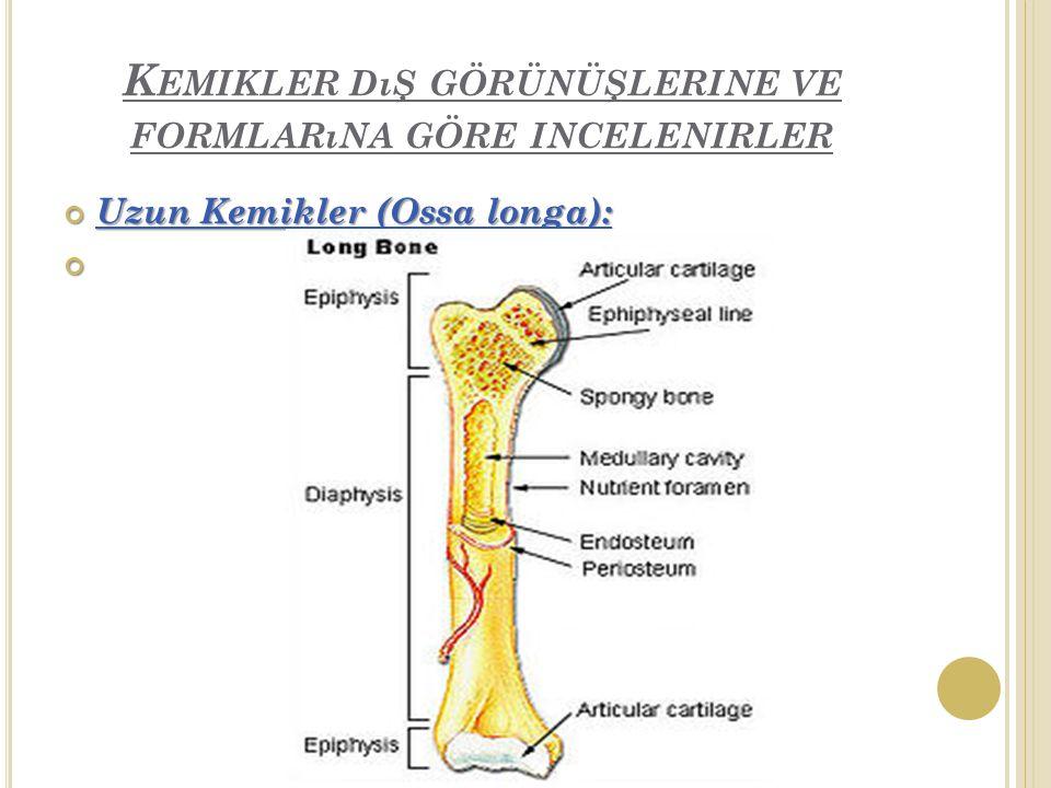 Kemikler dış görünüşlerine ve formlarına göre incelenirler