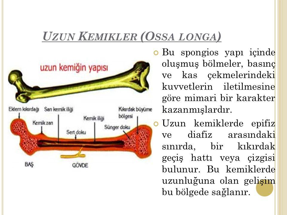 Uzun Kemikler (Ossa longa)