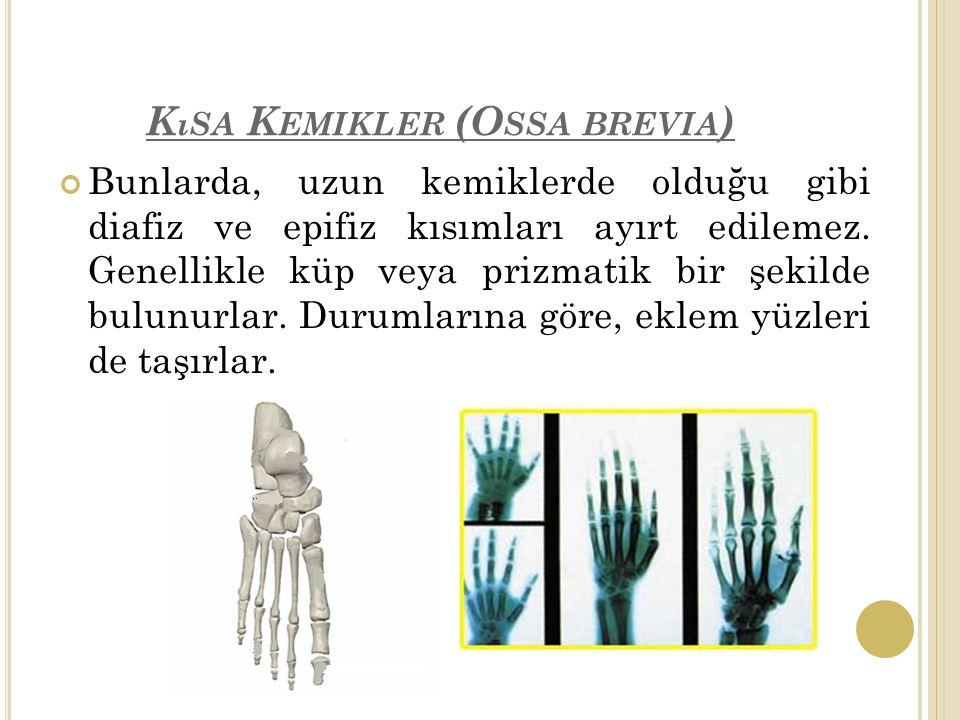 Kısa Kemikler (Ossa brevia)