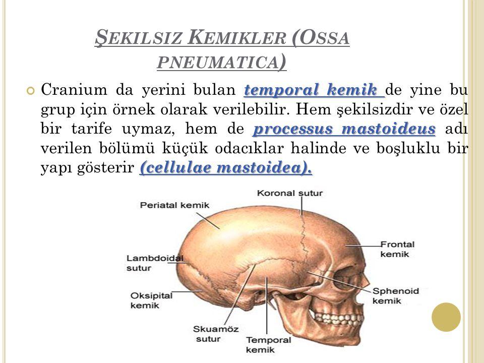 Şekilsiz Kemikler (Ossa pneumatica)