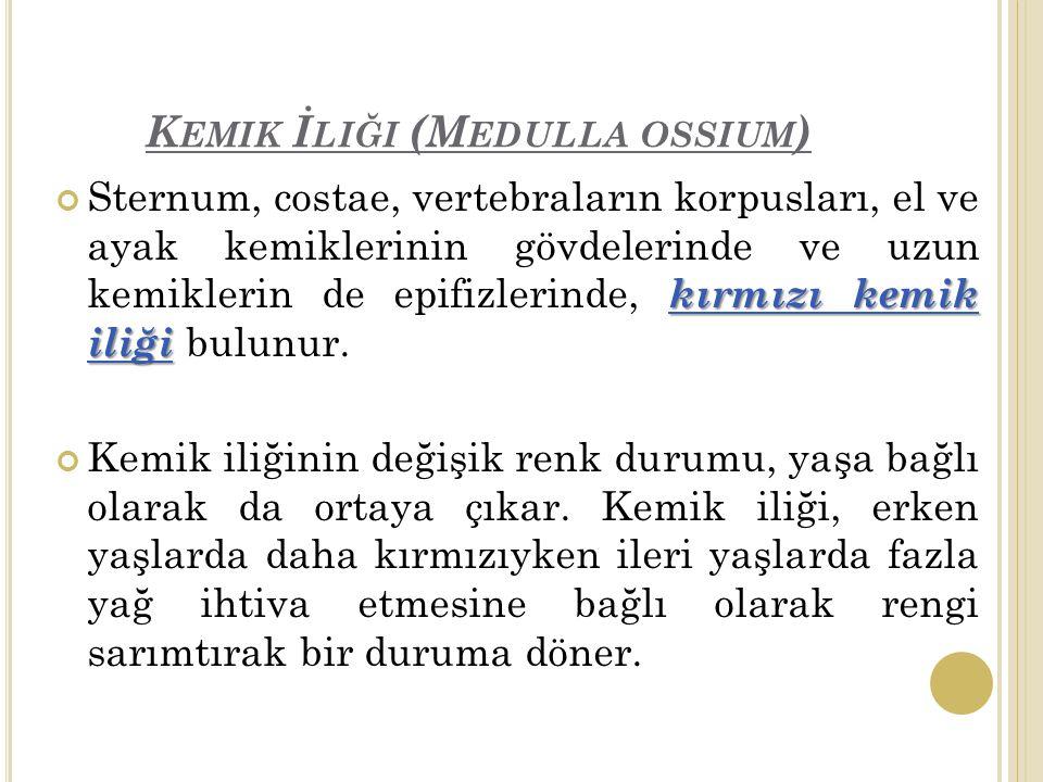 Kemik İliği (Medulla ossium)