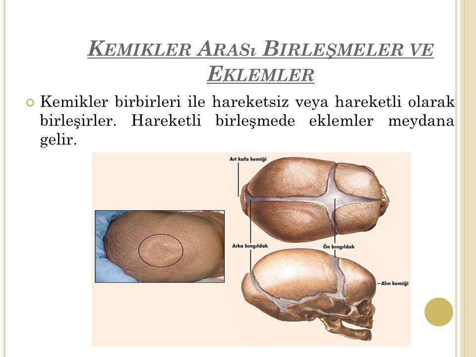 Kemikler Arası Birleşmeler ve Eklemler