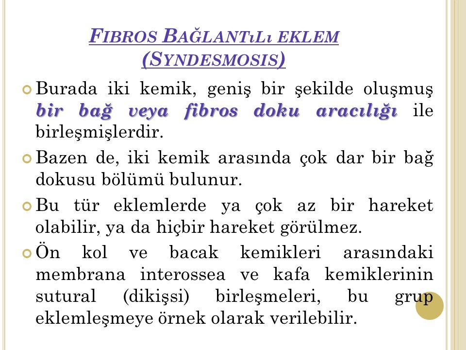 Fibros Bağlantılı eklem (Syndesmosis)