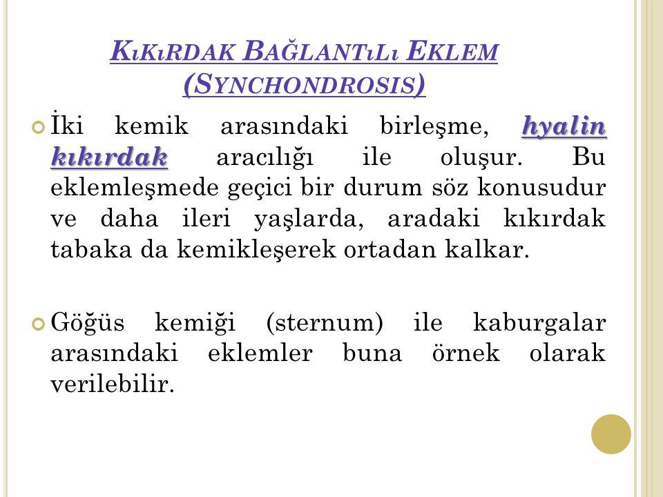 Kıkırdak Bağlantılı Eklem (Synchondrosis)