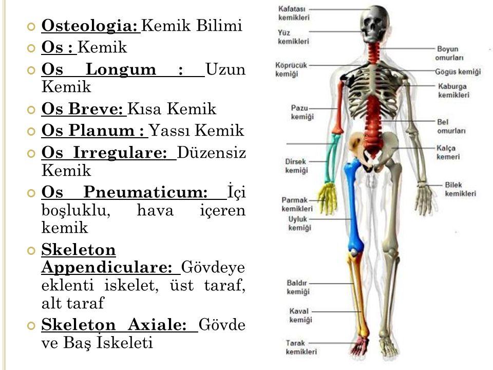 Osteologia: Kemik Bilimi