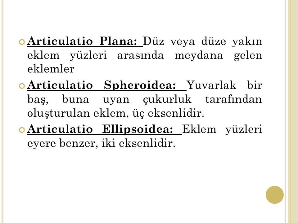 Articulatio Plana: Düz veya düze yakın eklem yüzleri arasında meydana gelen eklemler
