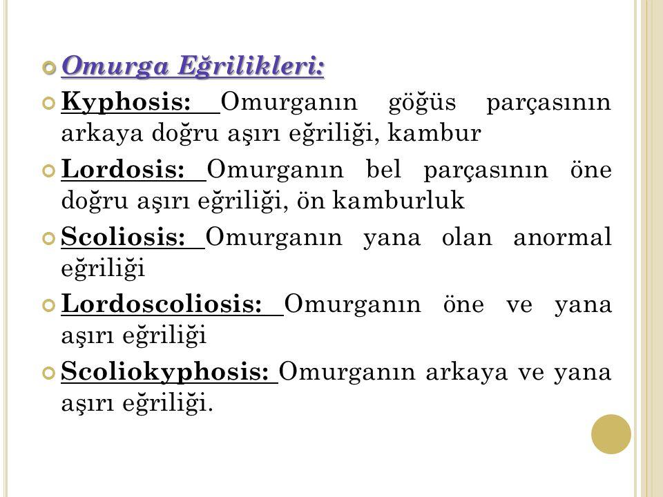 Omurga Eğrilikleri: Kyphosis: Omurganın göğüs parçasının arkaya doğru aşırı eğriliği, kambur.