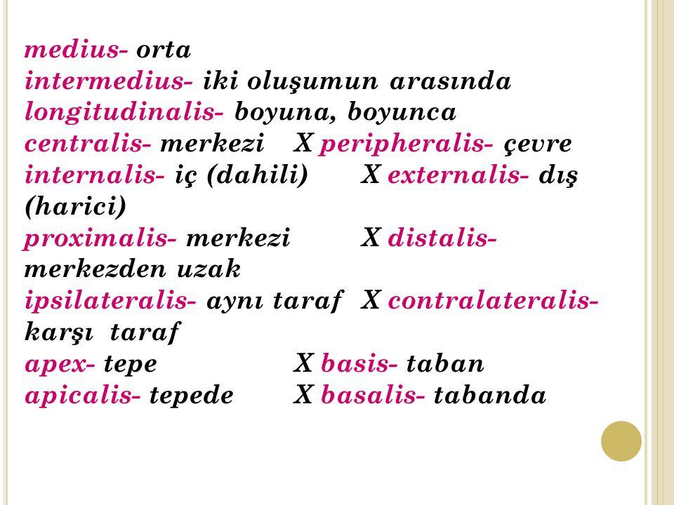 medius- orta intermedius- iki oluşumun arasında. longitudinalis- boyuna, boyunca. centralis- merkezi X peripheralis- çevre.
