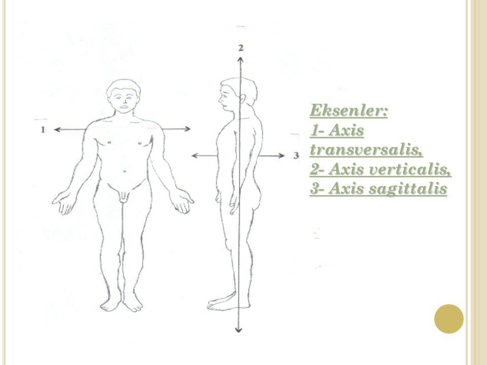 Eksenler: 1- Axis transversalis, 2- Axis verticalis, 3- Axis sagittalis