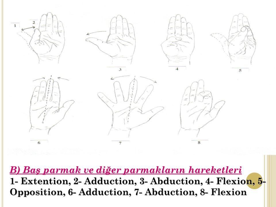 B) Baş parmak ve diğer parmakların hareketleri