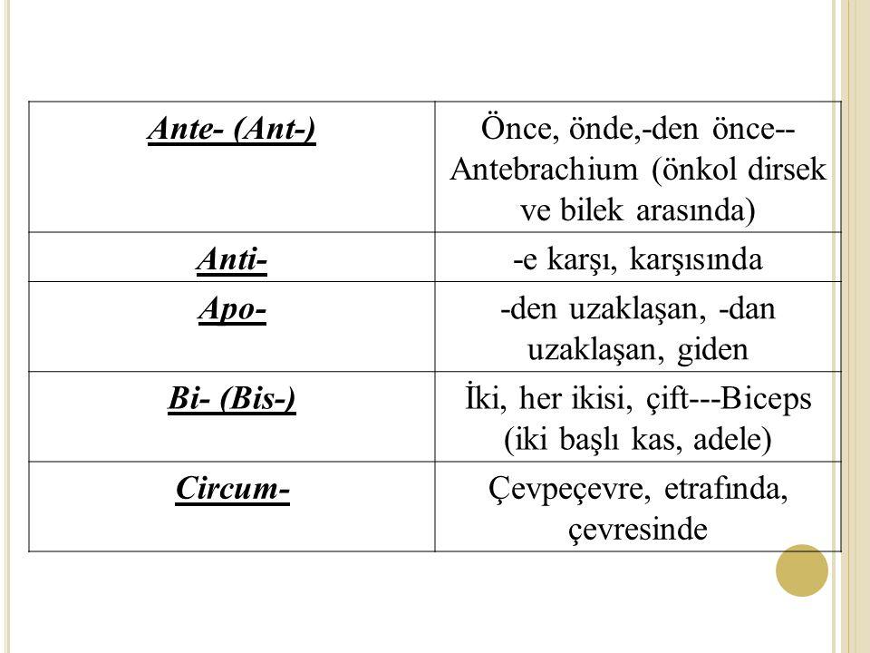 Ante- (Ant-) Anti- Apo- Bi- (Bis-) Circum-