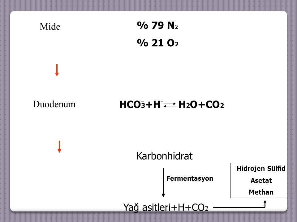 % 79 N2 Mide % 21 O2 Duodenum HCO3+H H2O+CO2 Karbonhidrat