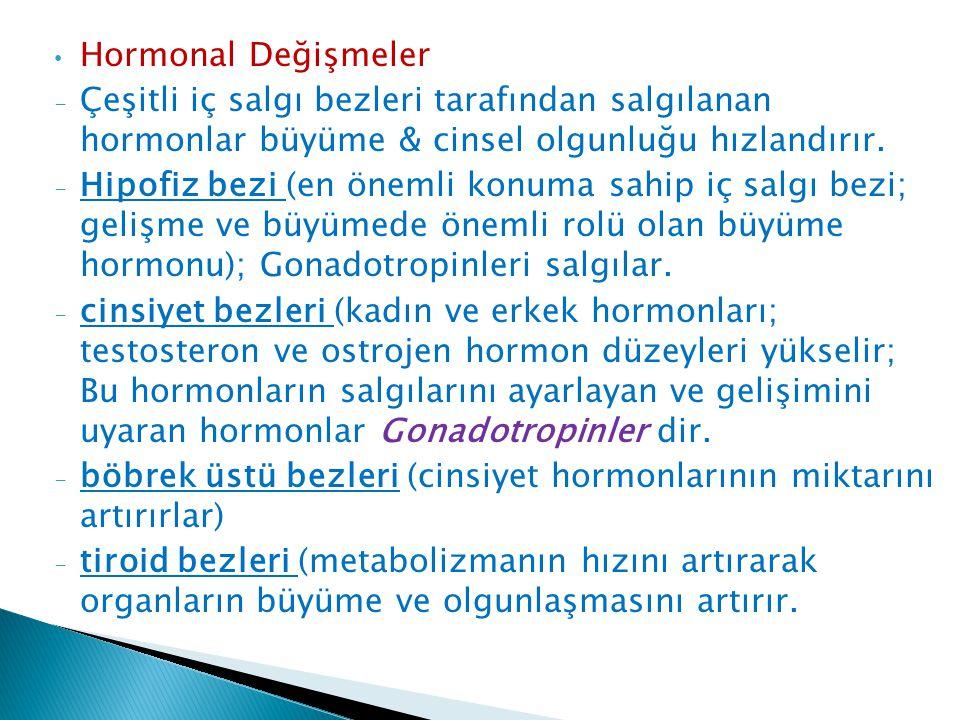 Hormonal Değişmeler Çeşitli iç salgı bezleri tarafından salgılanan hormonlar büyüme & cinsel olgunluğu hızlandırır.