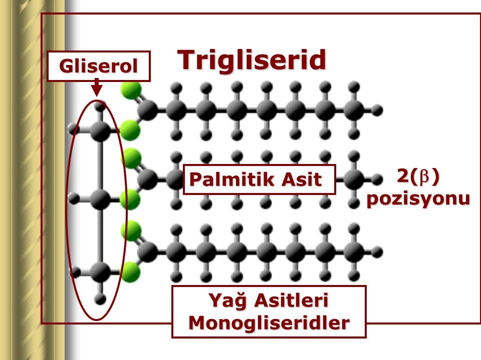 Yağ Asitleri Monogliseridler
