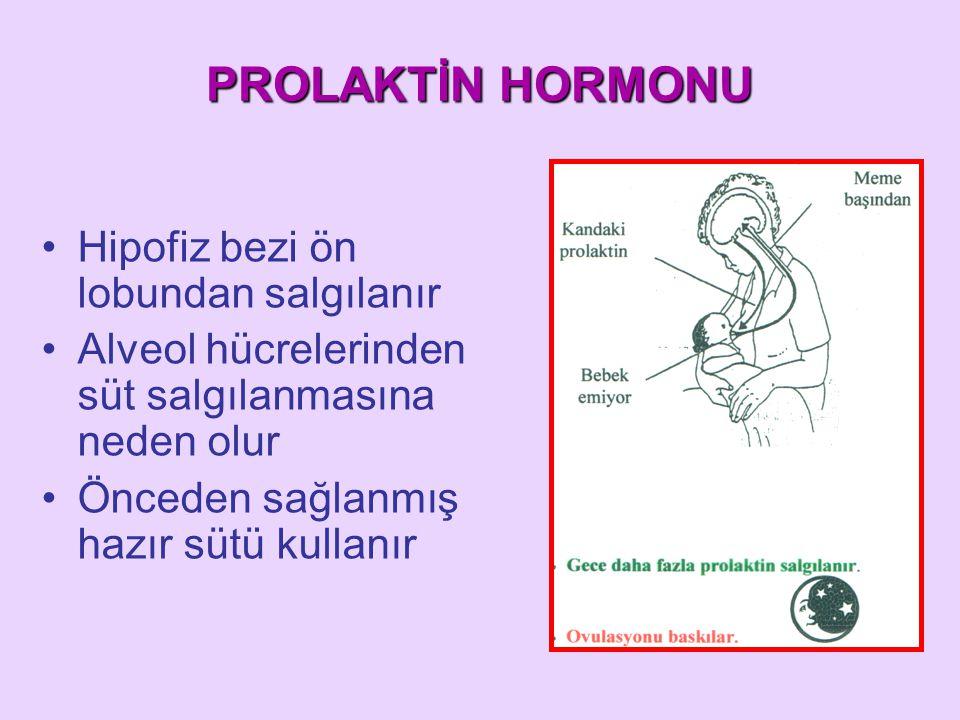 PROLAKTİN HORMONU Hipofiz bezi ön lobundan salgılanır