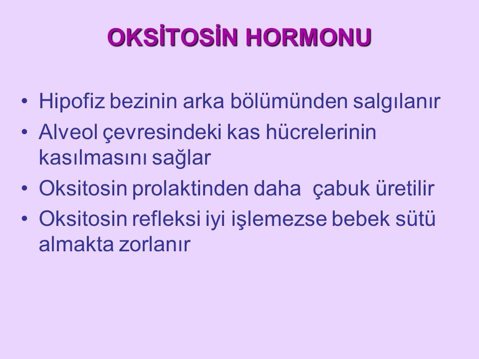 OKSİTOSİN HORMONU Hipofiz bezinin arka bölümünden salgılanır