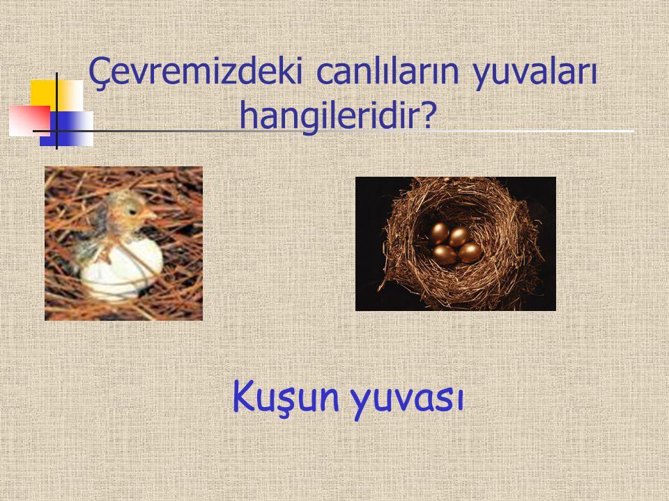 Çevremizdeki canlıların yuvaları hangileridir